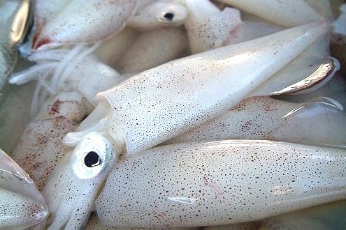 Выбираем и чистим кальмаров